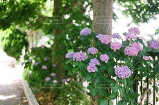近くのフラワー ガーデンの写真・画像素材[1253459]