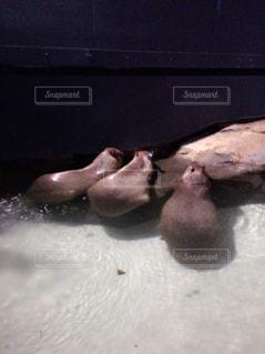 水族館の写真・画像素材[670928]
