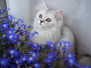 ミヌエットと花の写真・画像素材[910640]
