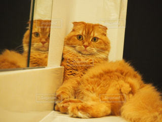 ボックスに座ってオレンジと白猫の写真・画像素材[984244]