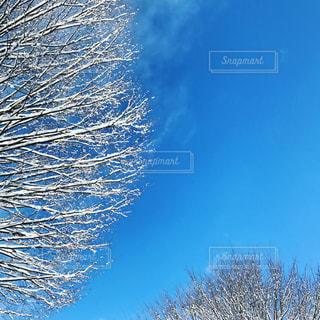 澄んだ青い空の写真・画像素材[1671085]
