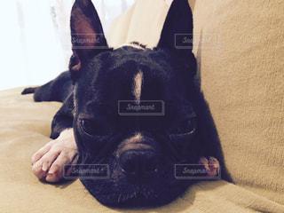 地面に横たわっている黒犬の写真・画像素材[741963]