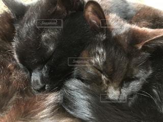 家族,猫,動物,屋内,ペット,人物,なかよし,ネコ