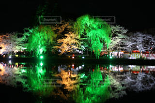 夜桜の写真・画像素材[1841375]