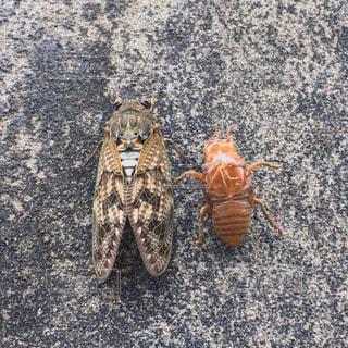 虫取り,昆虫,セミ,蝉,虫捕り