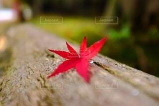 花のクローズアップの写真・画像素材[3713851]