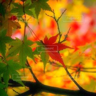 木のクローズアップの写真・画像素材[3713849]