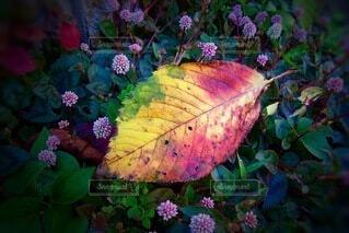 花のクローズアップの写真・画像素材[3713852]