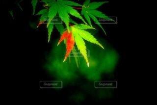 植物のクローズアップの写真・画像素材[3713855]