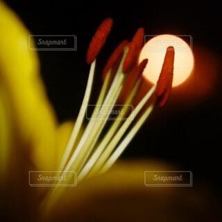 花のクローズアップの写真・画像素材[3720336]