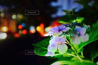 花のクローズアップの写真・画像素材[4567930]