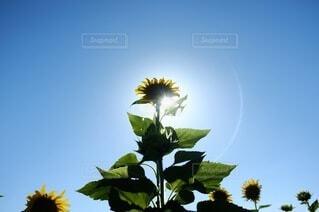 晴れた日に花瓶の写真・画像素材[4663640]