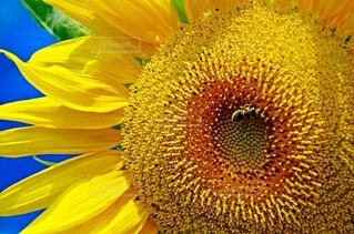 花のクローズアップの写真・画像素材[4663644]