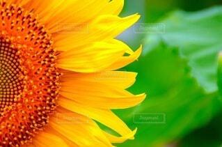 花のクローズアップの写真・画像素材[4663645]
