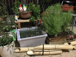 庭の植物の写真・画像素材[733158]