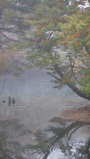 秋,紅葉,福島県,猪苗代湖,猪苗代湖町