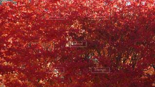 自然,秋,紅葉,福島県,葛尾村