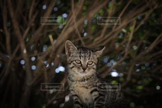 カメラを見ている猫の写真・画像素材[723138]