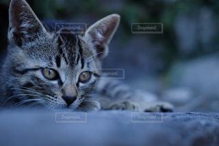 近くに猫のアップの写真・画像素材[723144]