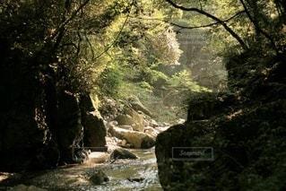 森の中の大きな川の写真・画像素材[3340912]