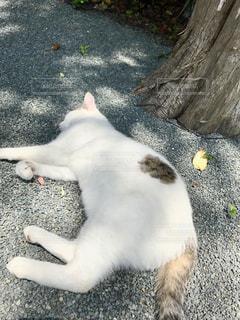 地面に横になっている猫の写真・画像素材[721260]