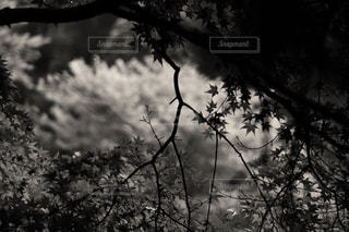 自然の写真・画像素材[828145]
