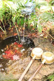 背景の水の庭 - No.754559
