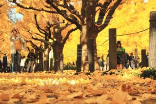木の隣に立っている人のグループの写真・画像素材[772806]