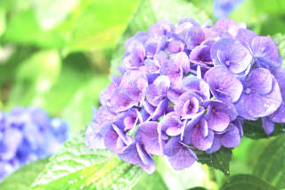 近くの花のアップの写真・画像素材[850380]
