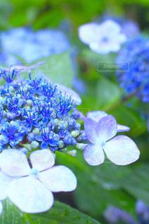近くの花のアップの写真・画像素材[850382]