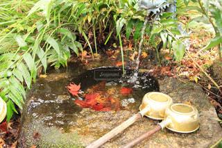 庭の植物の写真・画像素材[875853]