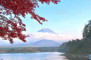 背景の山と水を体の横にあるツリーの写真・画像素材[875862]