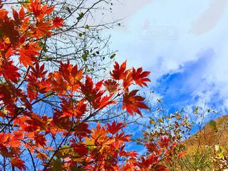 花の前に木の写真・画像素材[893358]