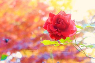 近くの花のアップの写真・画像素材[893488]