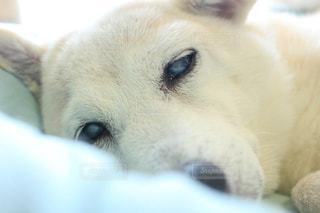 近くに犬のアップの写真・画像素材[974559]