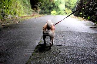 道の端に歩く犬の写真・画像素材[974582]