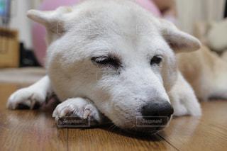 近くに犬のアップの写真・画像素材[974595]