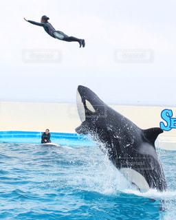水の外に飛び出すイルカの写真・画像素材[1014311]