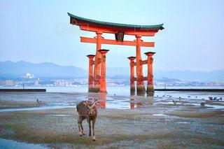 水の体の横に犬の地位の写真・画像素材[1014374]