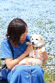 犬を保持している小さな女の子の写真・画像素材[1015634]