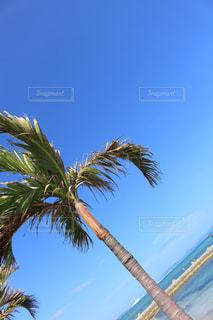 ヤシの木の写真・画像素材[1107370]