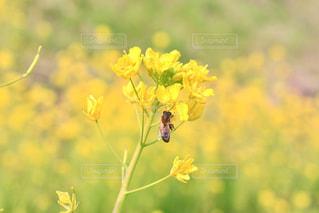 近くの花のアップの写真・画像素材[1124227]