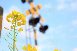 近くの花のアップの写真・画像素材[1124233]