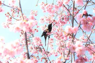 木の枝に座っている鳥の写真・画像素材[1124250]