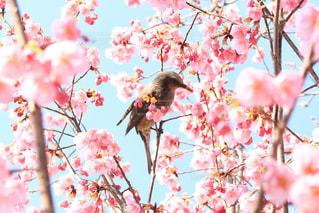 近くに木の枝に腰掛け鳥のアップの写真・画像素材[1124254]
