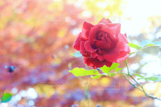 近くの花のアップの写真・画像素材[1124331]