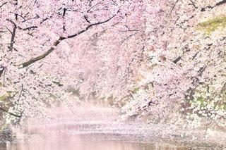 木の隣に水します。の写真・画像素材[1147471]