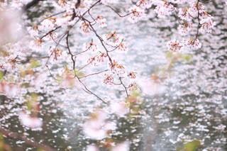 近くの木のアップの写真・画像素材[1147472]