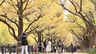 木の隣に立っている人のグループの写真・画像素材[1645907]