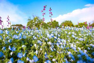 近くの花のアップの写真・画像素材[1218662]